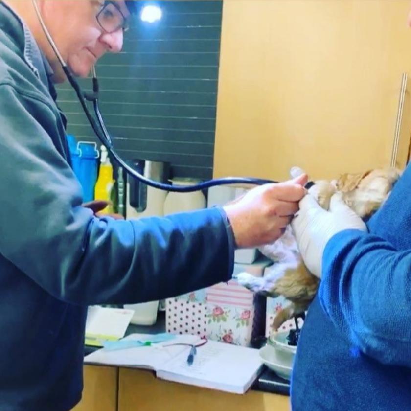 Puppies Health Check